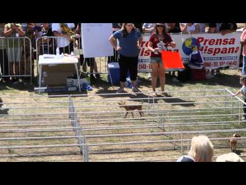Highlights from the 2012 Chihuahua Race