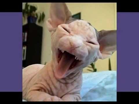 Gatos mais feios do mundo