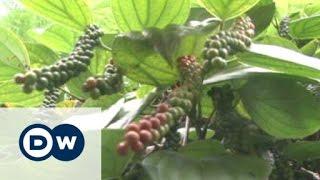 Spice mixture maker aims for organic market | Business - DEUTSCHEWELLEENGLISH