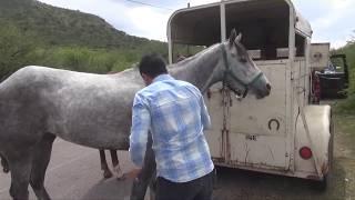 La Gavia (Jerez, Zacatecas)