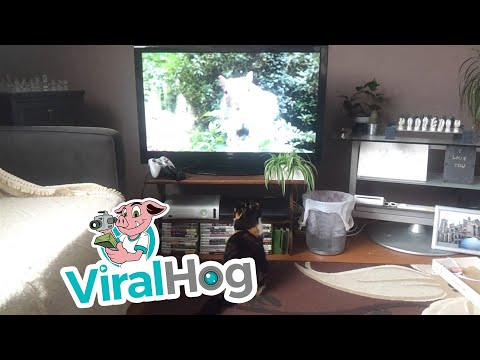 Cat Runs Away from Squirrel on Television