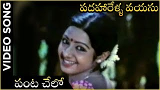 Panta Chelo Video Song | Padaharella Vayasu Movie | Sridevi | Chandra Mohan | K. Chakravarthi - RAJSHRITELUGU