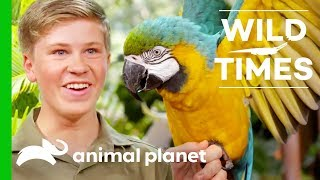 Meet The Majestic Blue And Gold Macaw | Wild Times - ANIMALPLANETTV