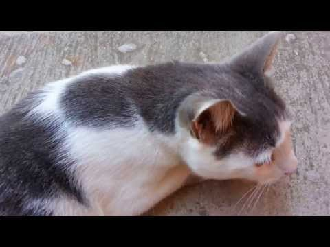 Cat open five doors to go outside -        