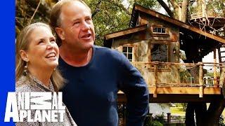 Top 5 Outdoor Adventure Treehouses! - ANIMALPLANETTV
