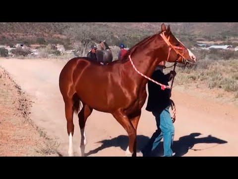 Carreras de Caballos en La Gavia