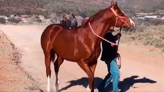 Carreras de caballos en La Gavia (Jerez, Zacatecas)
