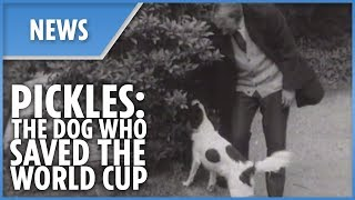 Pickles - The dog who saved the 1966 World Cup - THESUNNEWSPAPER