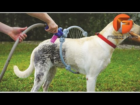 5 INSANE Pet Toys & Gadgets You Must See ▶2
