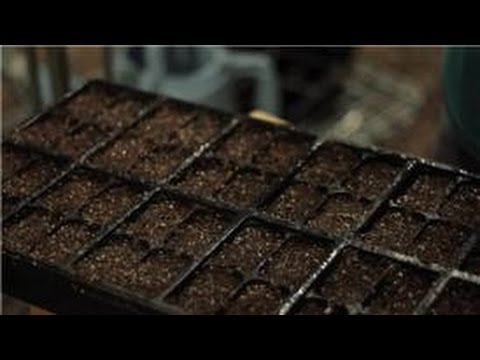 Gardening Basics : How to Plant Seeds for a Home Herb Garden