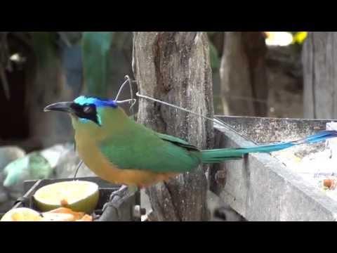 Pássaros no comedouro coletivo, Pássaros silvestres,