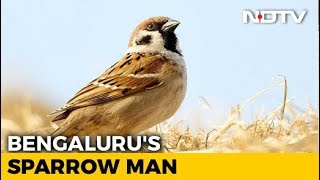 World Sparrow Day: How Bengaluru's 'Sparrow Man' Is Saving House Sparrows From Extinction - NDTV