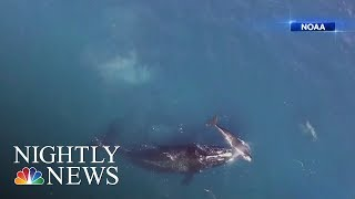 Scientists Warn Seismic Testing For Oil And Gas Puts Marine Life At Risk | NBC Nightly News - NBCNEWS