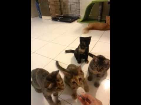 Kittens play time pt.2 ^_^