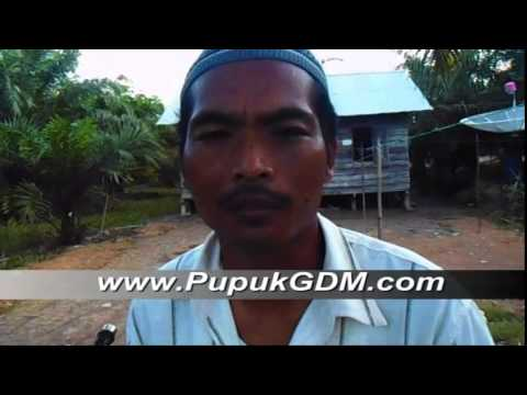 Bpk Moh Aan Menggunakan Pupuk Organik Cair GDM Pada Tanaman Sawit