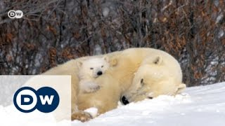 Ice-cold art: The polar bear photographer | Euromaxx - DEUTSCHEWELLEENGLISH