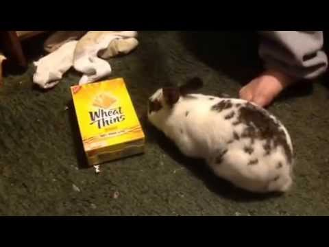 Bunny addicted to Wheat Thins