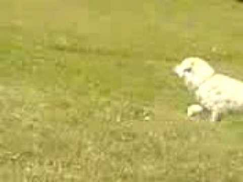 qent e sharrit