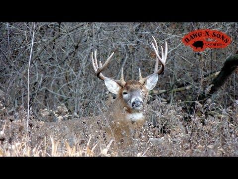 Self Filmed Whitetail Deer BowHunting - Rutting Bucks Seeking Estrus Does