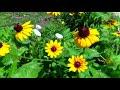 True Love Will Never Fade, Mark Knopfler,  Favored Flower & Co