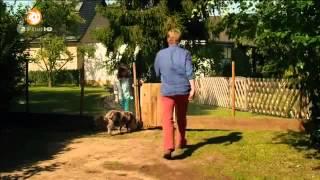 301 Schwein - Die superschlaue Mini-Sau