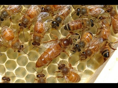 Beekeepers' # 1 Concern for Honey Bees