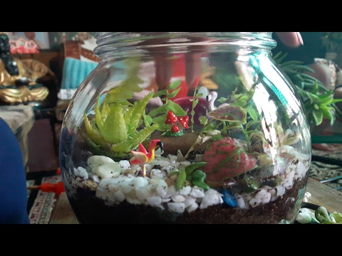 How to make Terrarium ? || Terrarium in a pot || Fun Gardening || 27 May, 2017