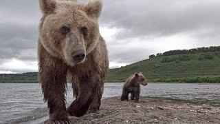 Медведи Росии.Russian Bears.