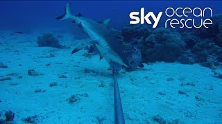 Deep Ocean Live: A look back at the dives in the Seychelles - SKYNEWS