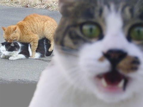 صور قطط تموت ضحك - عرب توداي