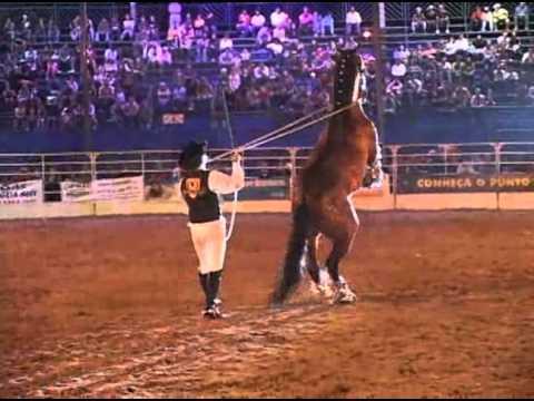 Cavalos Adestrados / BRW