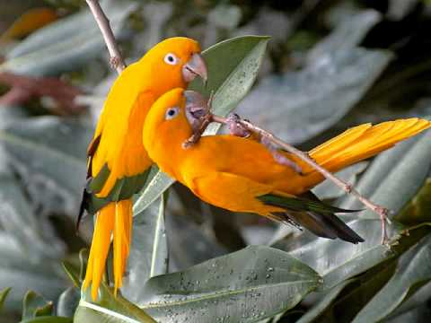 ''BEAUTIFUL BIRDS'',AVES EXOTICAS,MUSICA CLASICA, INSTRUMENTAL,FOTO VIDEO