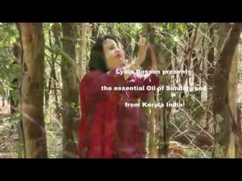 Aromatherapy - Sandalwood Essential Oil - Lydia Bosson