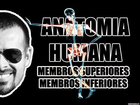 Vídeo Aula 051 - Anatomia Humana: Anatomia regional dos membros superiores e inferiores