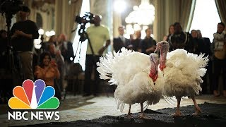Watch Live: President Trump leads turkey pardoning at White House - NBCNEWS
