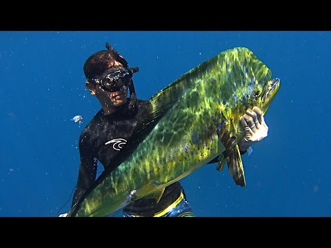 Fusion Spearfishing