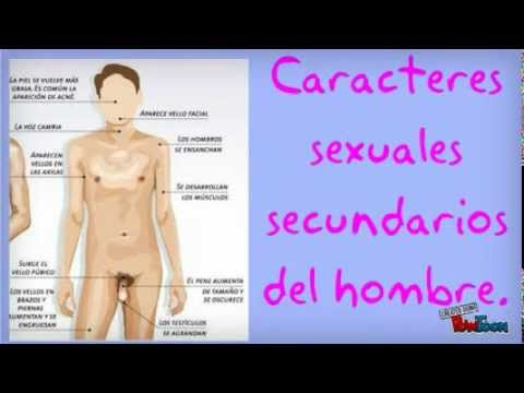 Caracteres sexuales