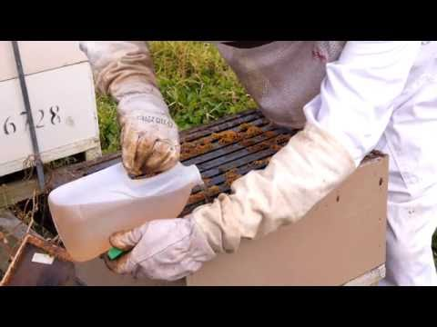 Beekeeping Basics with Bruce Clow - Feeding Bees with Sugar Syrup.