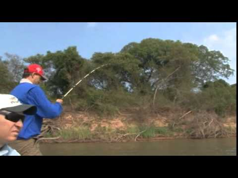 Pesca de Pirarara Araguaia parte 2