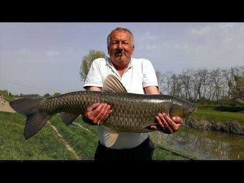 Pecanje na plovak - Amur 11 kg