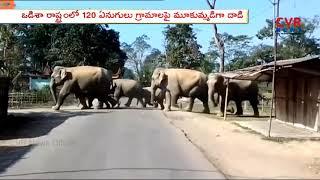 హడలెత్తిస్తున్న ఏనుగుల గుంపు.. | Elephants Group Hulchul in Odisha | CVR News - CVRNEWSOFFICIAL