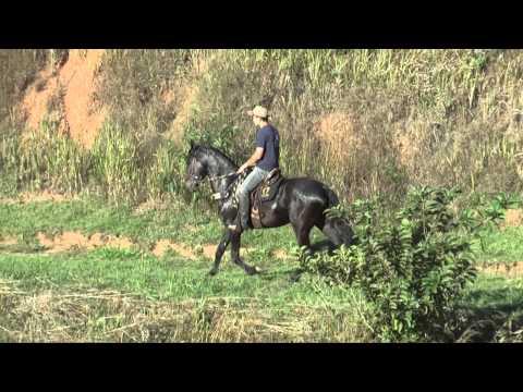Haras Academia dos Rocha - Cavalo: Venturoso do Conforto
