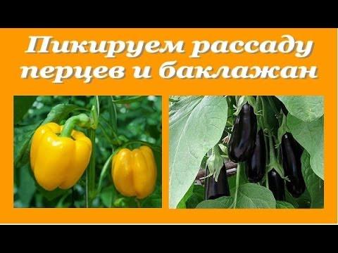 devushka-pokazala-svoyu-shikarnuyu-grud