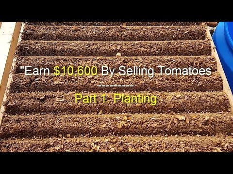 EARN $10,600 BY SELLING TOMATOES - Step 1: Planting
