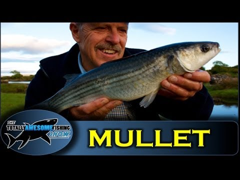 How to catch creek Mullet - Ireland shore fishing - Totally Awesome Fishing Show