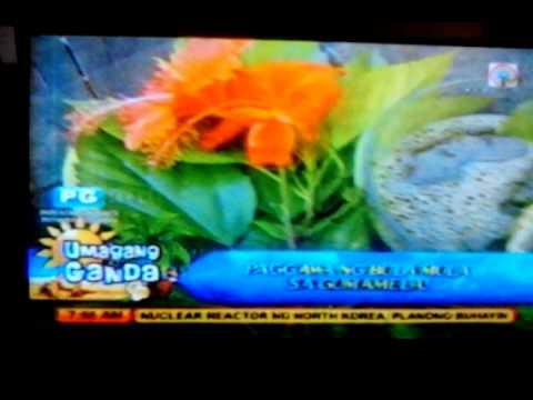 Umagang kayganda Abs cbn latest today