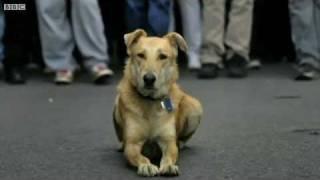 وفاة لوكانيكوس كلب المظاهرات اليوناني متأثرا بغاز الشرطة