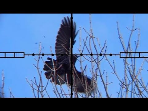 Air Rifle Crow Hunting - Ricochet Investigation