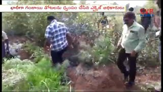 Excise Police Cut Red Sandal Trees in East godavari | CVR News - CVRNEWSOFFICIAL