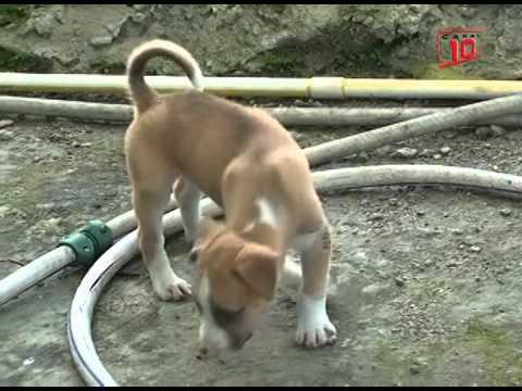 Cozumel:Registran epidemia llamada parvovirus en perros